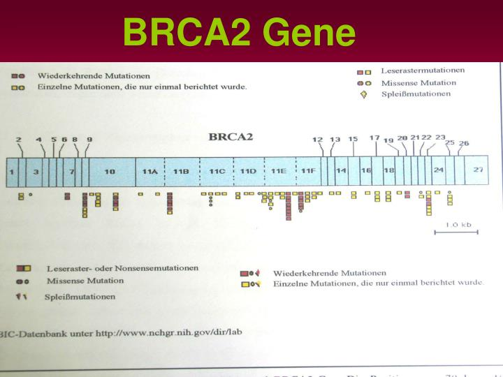 BRCA2 Gene