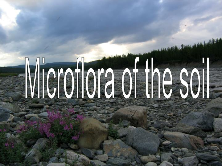 Microflora of the soil