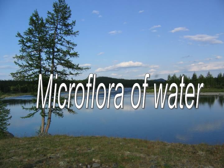 Microflora of water