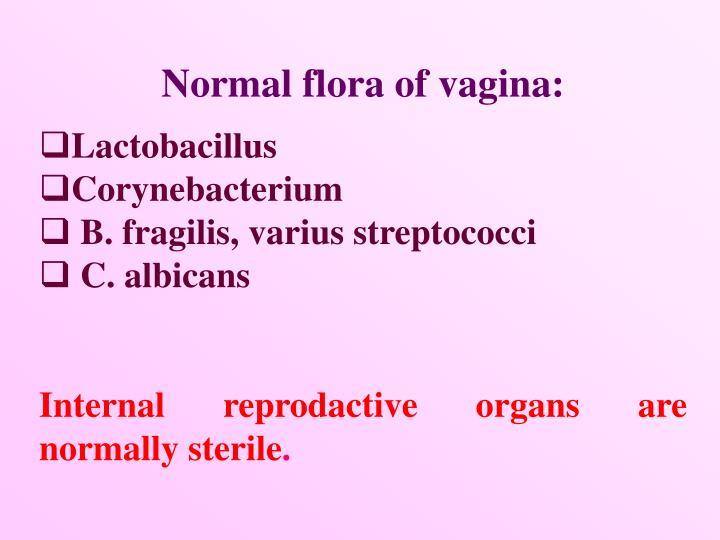 Normal flora of vagina:
