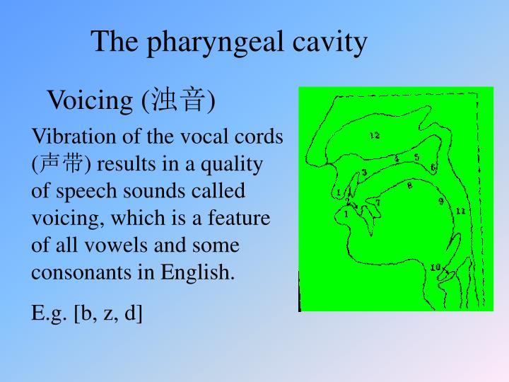 The pharyngeal cavity