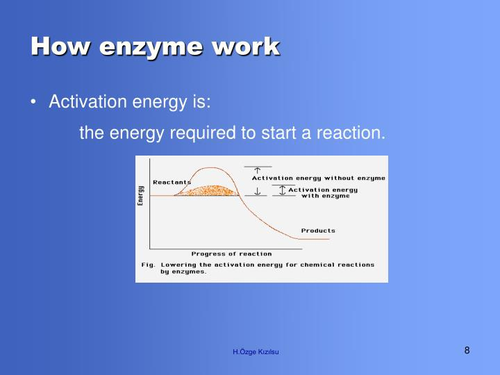 How enzyme work