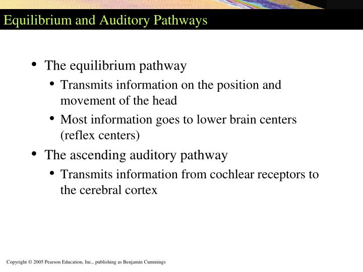 Equilibrium and Auditory Pathways