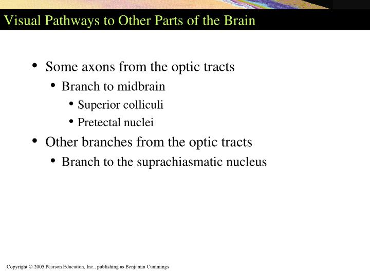Visual Pathways to Other Parts of the Brain