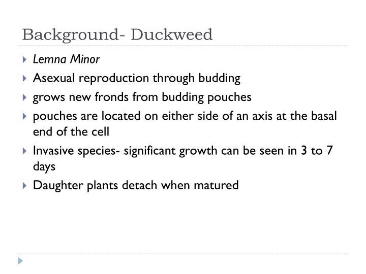 Background- Duckweed
