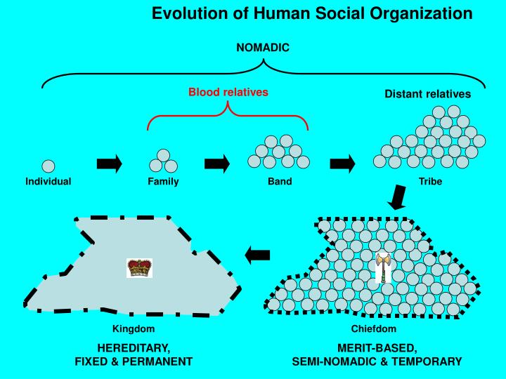 Evolution of Human Social Organization
