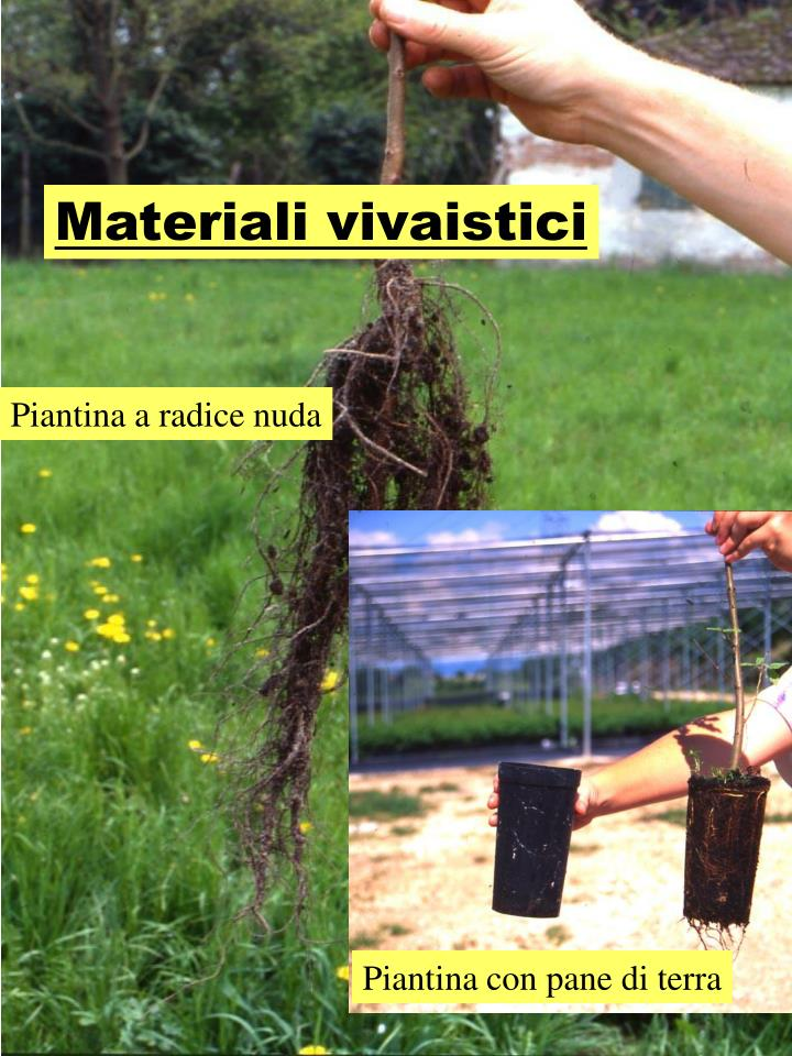 Materiali vivaistici
