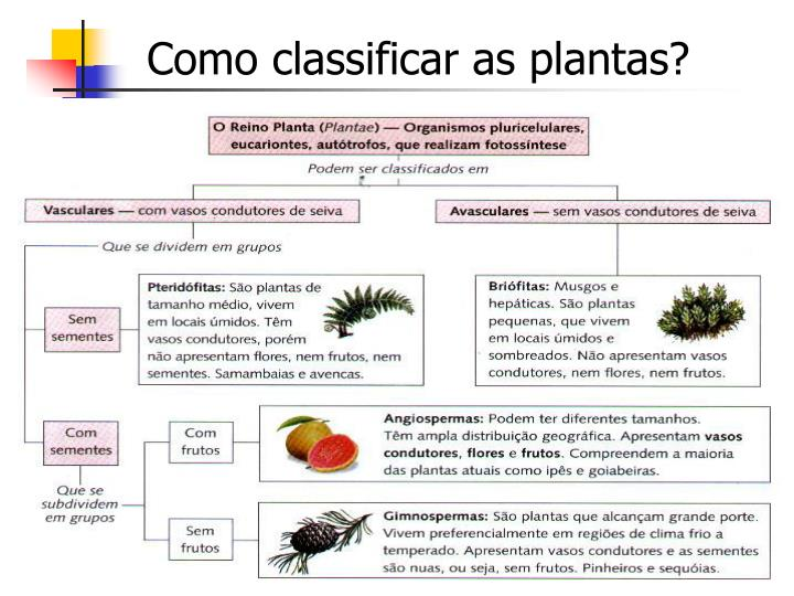 Como classificar as plantas?