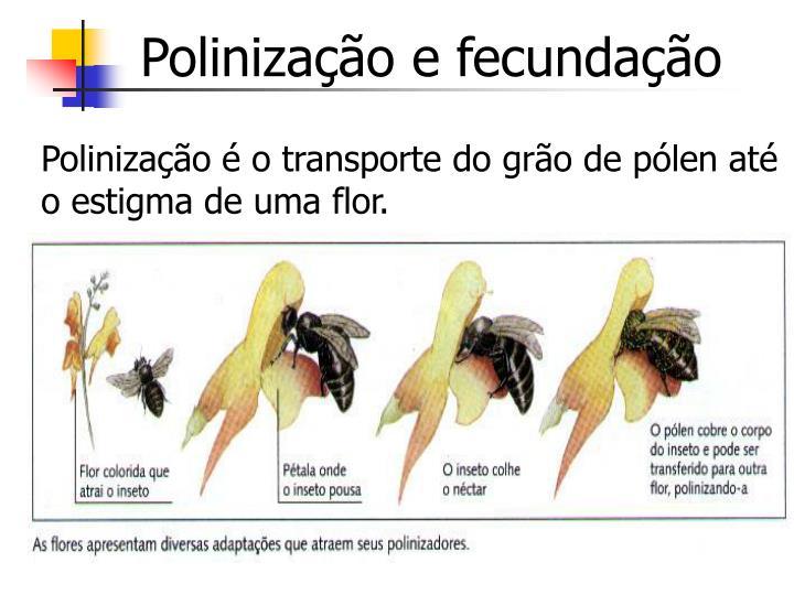 Polinização e fecundação