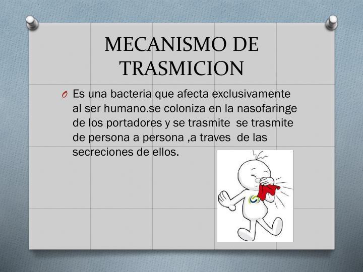 MECANISMO DE TRASMICION