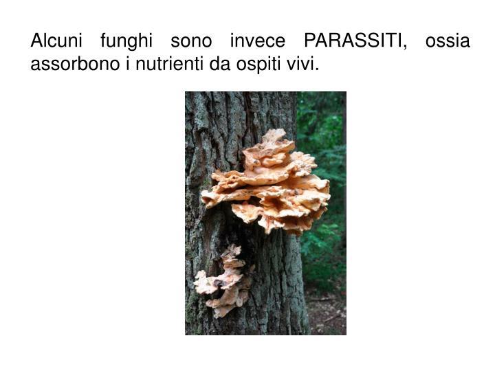Alcuni funghi sono invece PARASSITI, ossia assorbono i nutrienti da ospiti vivi.