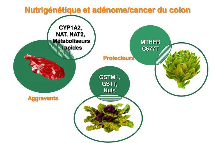 Nutrigénétique et adénome/cancer du colon
