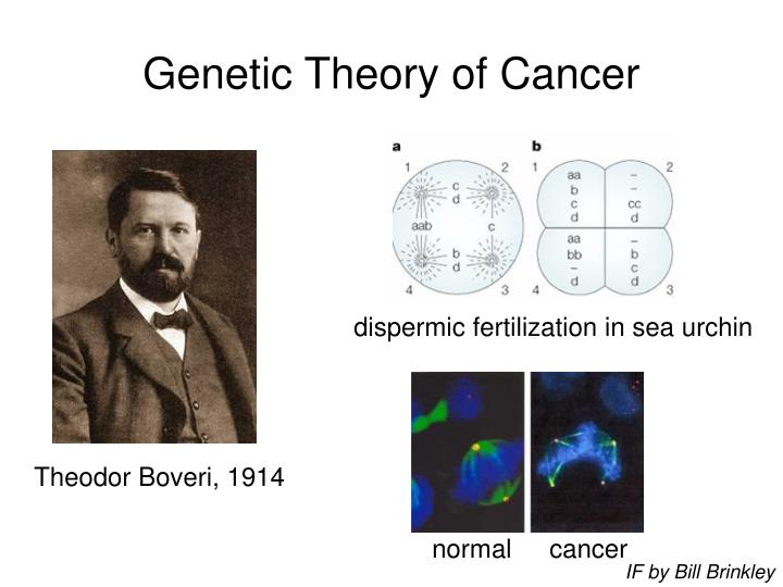 Genetic Theory of Cancer
