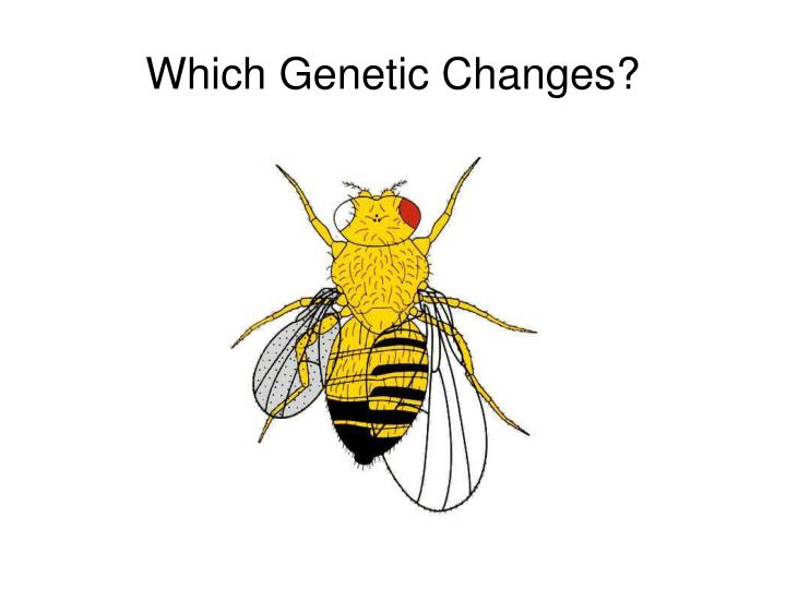 Which Genetic Changes?