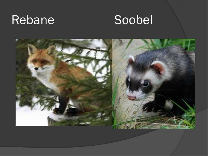 Rebane                  Soobel