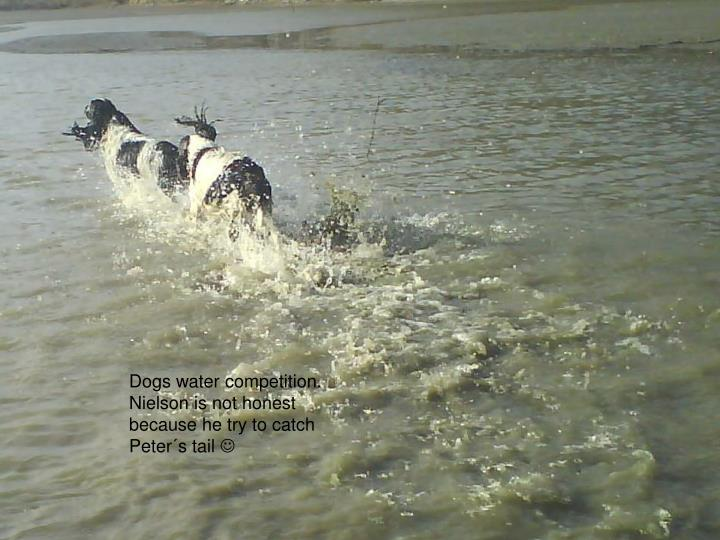 Dogs water competition. Nielson is not honest because he try to catch Peter´s tail