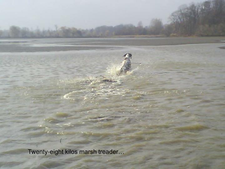 Twenty-eight kilos marsh treader…