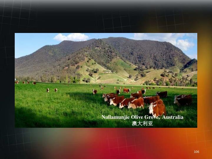 Nullamunjie Olive Grove,  Australia