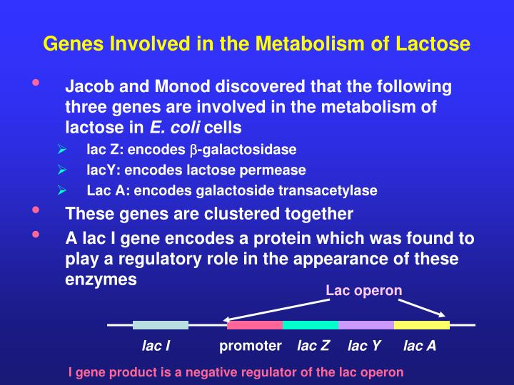 Genes Involved in the Metabolism of Lactose