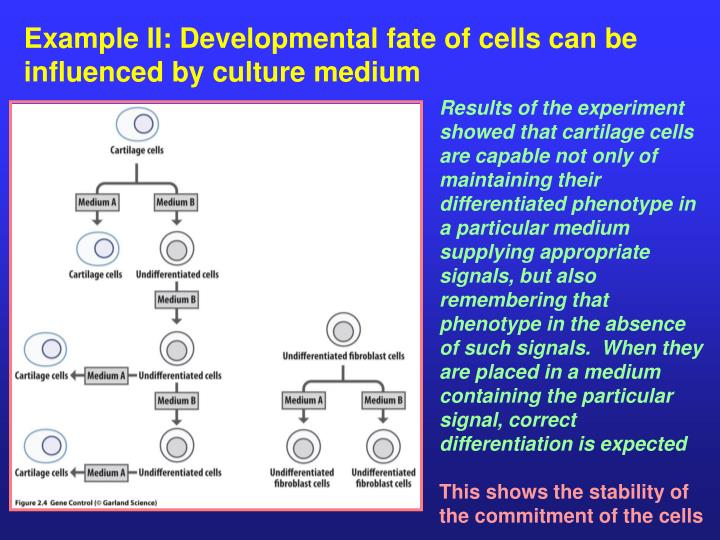 Example II: Developmental fate of cells can be influenced by culture medium