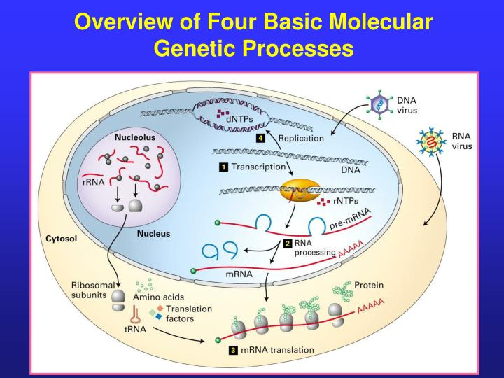 Overview of Four Basic Molecular Genetic Processes