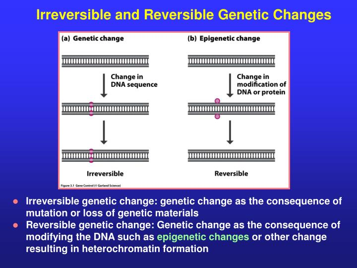 Irreversible and Reversible Genetic Changes