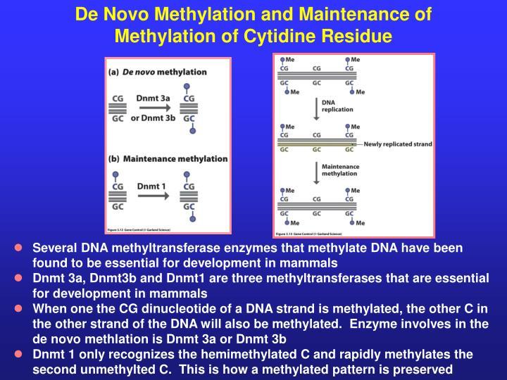 De Novo Methylation and Maintenance of Methylation of Cytidine Residue