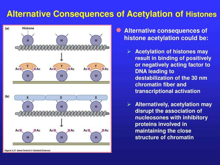 Alternative Consequences of Acetylation of