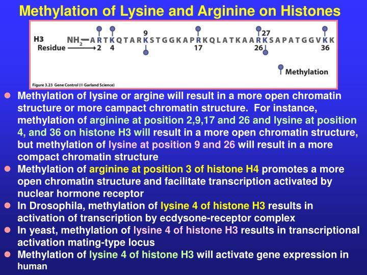 Methylation of Lysine and Arginine on Histones