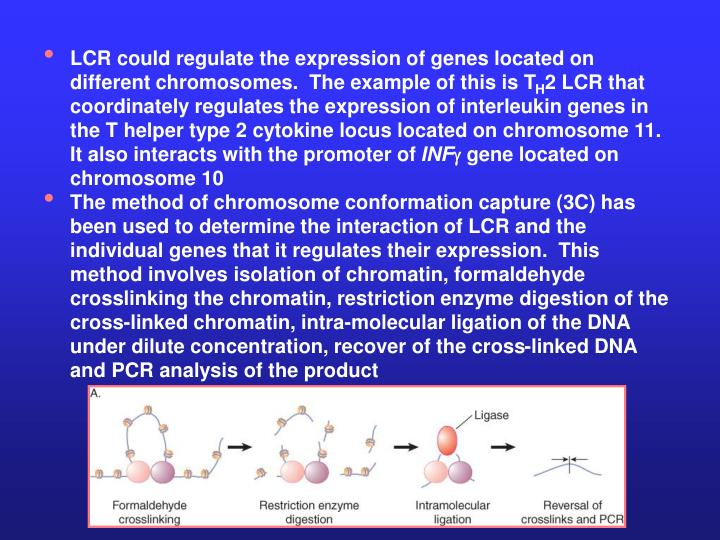 LCR could regulate the expression of genes located on different chromosomes.  The example of this is T