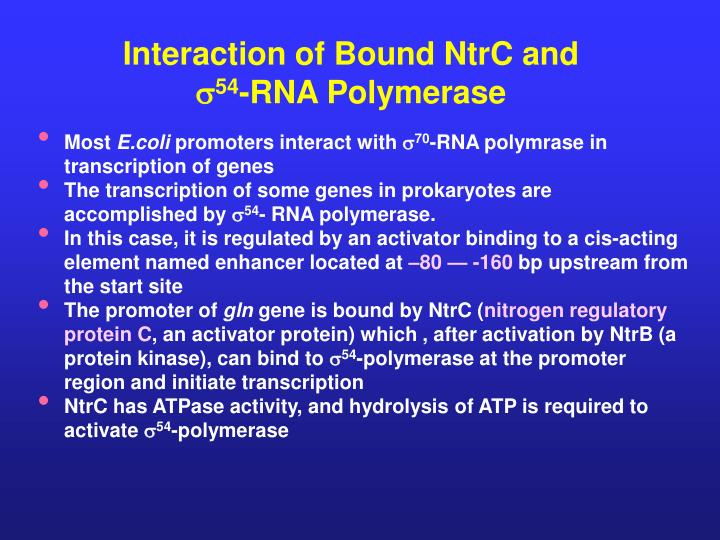Interaction of Bound NtrC and