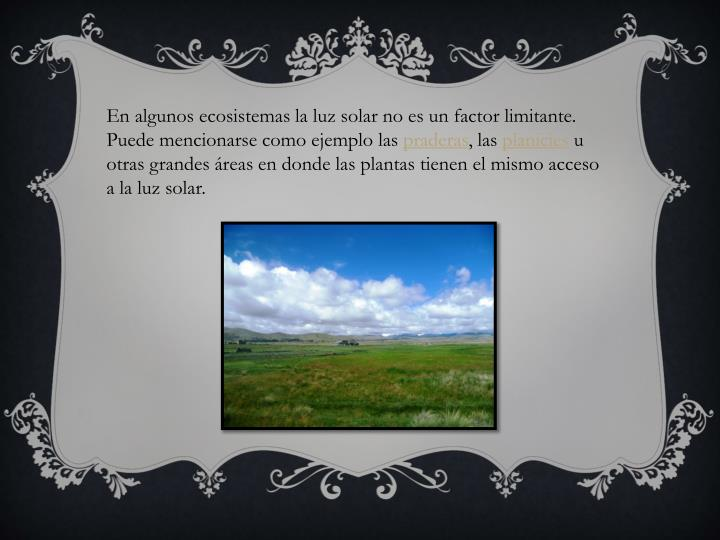 En algunos ecosistemas la luz solar no es un factor limitante.