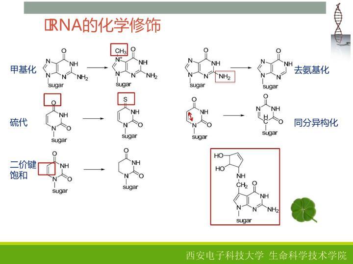 RNA的化学修饰