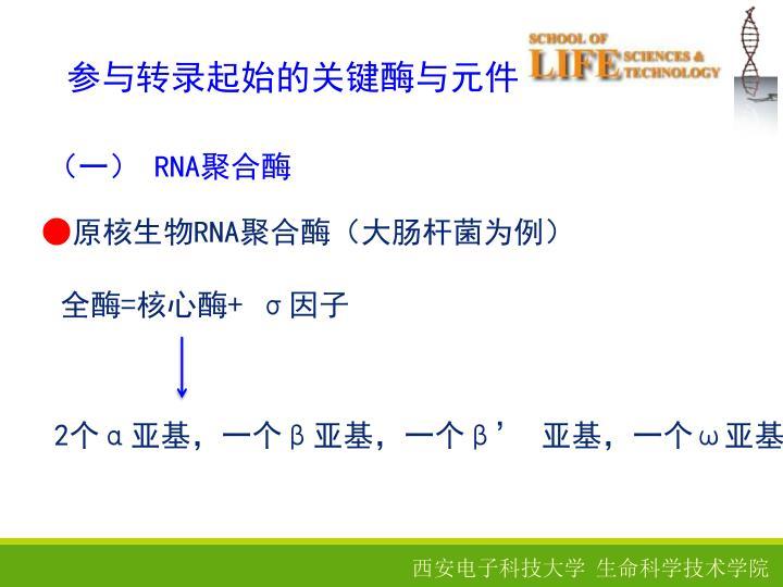 参与转录起始的关键酶与元件