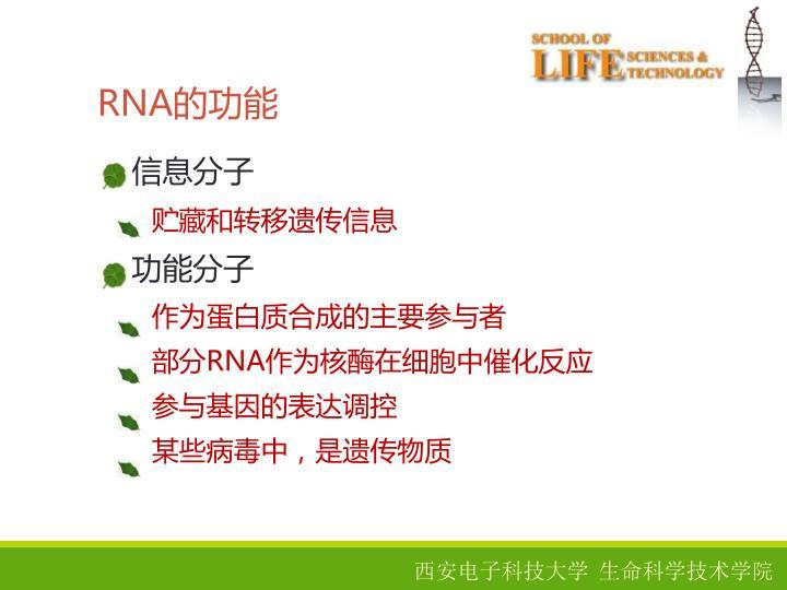 RNA的功能