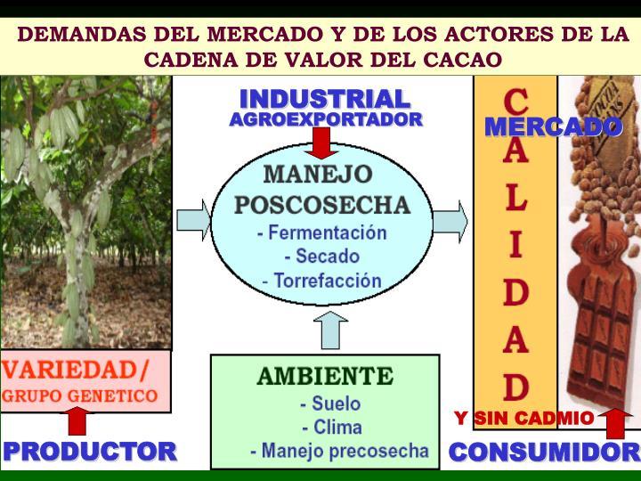 DEMANDAS DEL MERCADO Y DE LOS ACTORES DE LA CADENA DE VALOR DEL CACAO