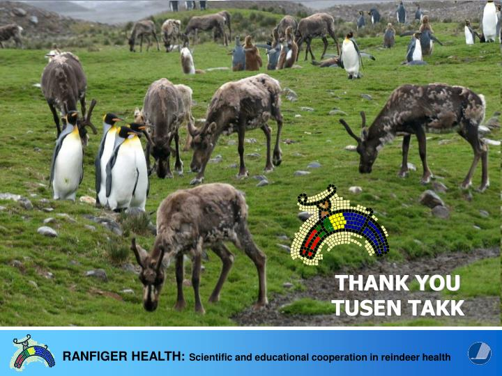 Reindeer health an issue with implications from pole….