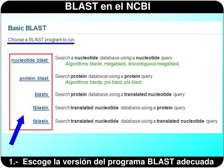 1.-  Escoge la versión del programa BLAST adecuada