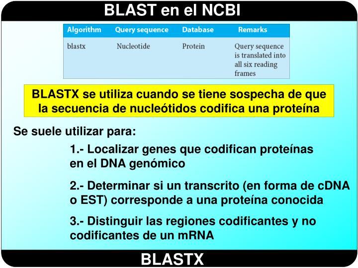 BLASTX se utiliza cuando se tiene sospecha de que la secuencia de nucleótidos codifica una proteína