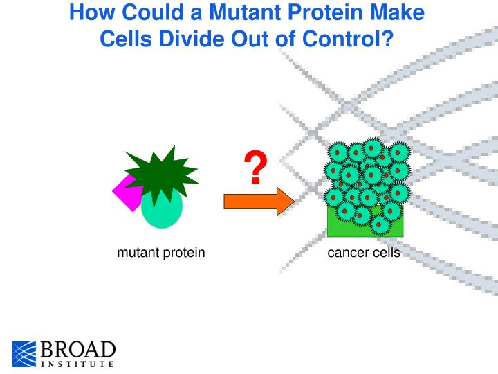 How Could a Mutant Protein Make Cells Divide Out of Control?