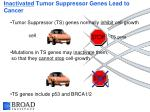 inactivated tumor suppressor genes lead to cancer