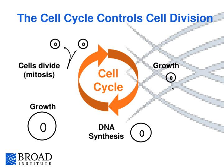 The Cell Cycle Controls Cell Division