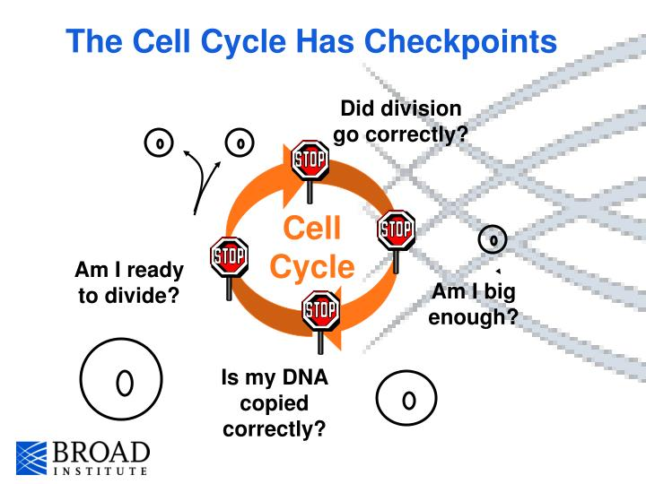 The Cell Cycle Has Checkpoints