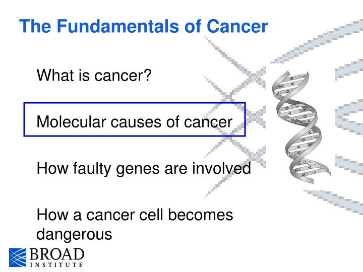 The Fundamentals of Cancer