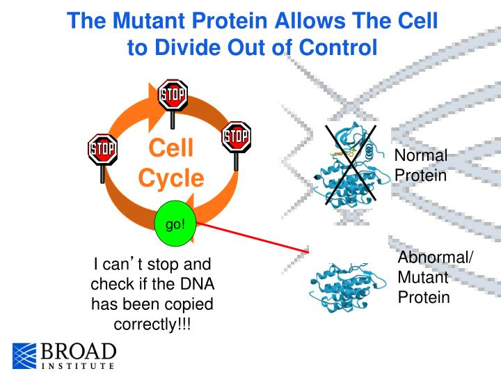 The Mutant Protein Allows The Cell to Divide Out of Control
