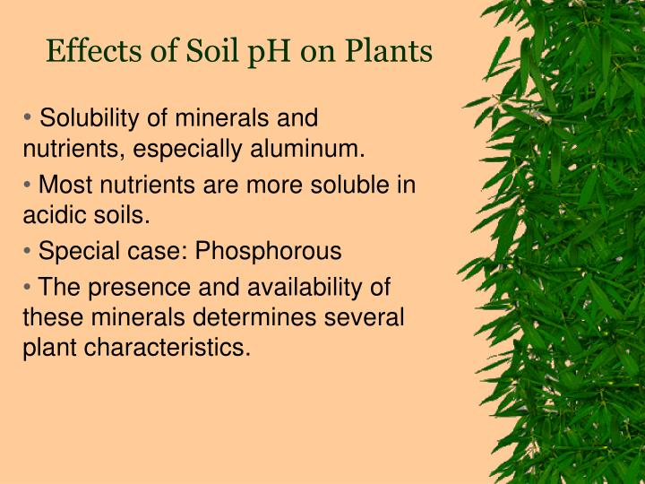 Effects of Soil pH on Plants
