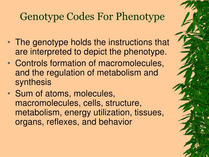 Genotype Codes For Phenotype