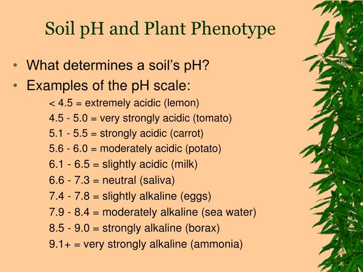 Soil pH and Plant Phenotype