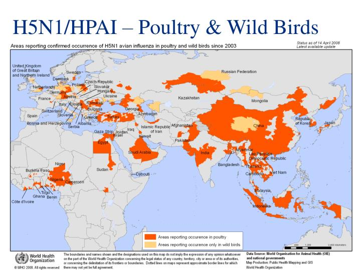 H5N1/HPAI – Poultry & Wild Birds