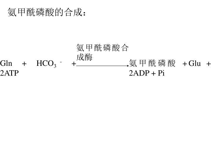 氨甲酰磷酸合成酶